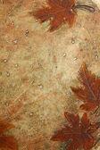 あなたのテキストのための場所と秋の背景 — ストック写真