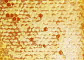 Natural honeycombs and honey close up for background — Stock Photo