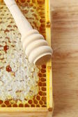 Wooden box with natural honeycombs and honey — Stock Photo