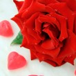Beautiful rose with water drops - symbol of love and passion — Stock Photo #5855803