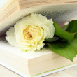 White rose inside the book - a love story concept — Stock Photo