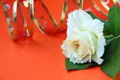 White roses and red ribbon on a red background — Stock Photo