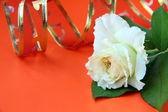 Bílé růže a červenou stuhou na červeném pozadí — Stock fotografie