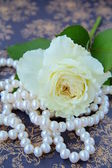 White rose and string of white pearls on a vintage background — Stock Photo