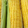 Closeup of yellow corn with additional ears of corn in the background — Stock Photo