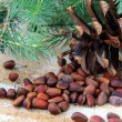 Pine nuts, with cedar cones and fir tree in the background - Stock Photo