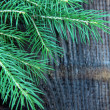 Royalty-Free Stock Photo: Branches green fir tree on a black background