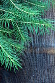 Branches green fir tree on a black background — Stock Photo