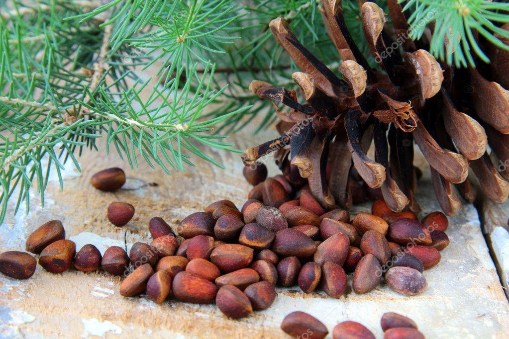Cedar Pine Cones Pine Nuts With Cedar Cones
