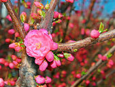 Flowering spring tree — Stockfoto