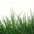Young green grass over white — Stock Photo