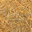 Stock Photo: Texture of straw