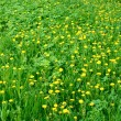 Stock Photo: Dandelion flowers in meadow