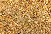 The texture of straw — Foto Stock