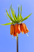 Spring orange flower — Stockfoto