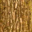 The bark of big old tree - Stock Photo