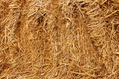 Pressed wheat straw — Stockfoto