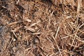Fragment of the compost heap — Stock Photo