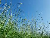Meadow herbs — Stock Photo