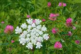 Flowering of motley plants — Stock Photo