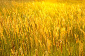 Meadow grass in sunny haze — Stock Photo