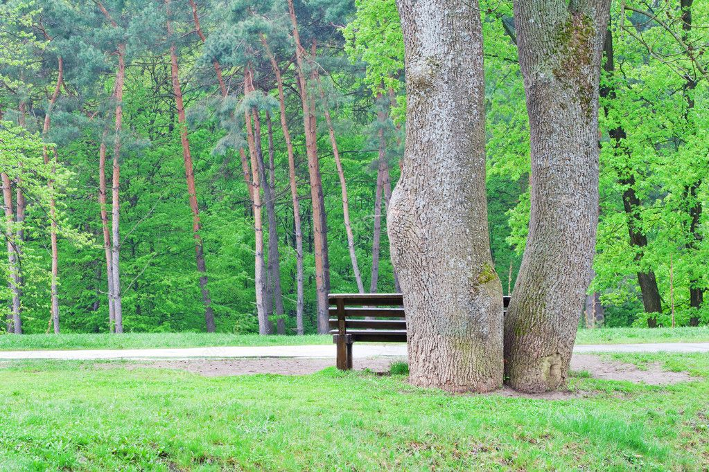 An empty bench under the trees near the road ready to accept tired traveler — Stock Photo #6378291