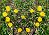 Heart made of yellow dandelions on green grass — Stock Photo