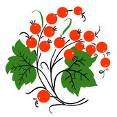 Bunch of red currant. Ripe berry. Vector — Stock Photo
