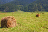 Hay rolls in the background of mountains — Stock Photo