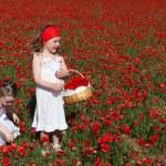 Little girls picking flowers in summer poppy field — Stock Photo