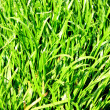Leaves grass green - Stock Photo