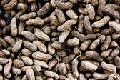 Ground nuts — Stock Photo