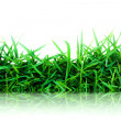 Grass green isolated on white ( Reflection on floor ) — Stock Photo #6085090