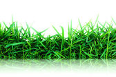 Grass green isolated on white ( Reflection on floor ) — Stock Photo