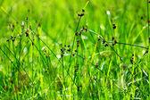 Kapky rosy na zelené trávě — Stock fotografie