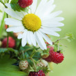 Bouquet from a camomile and wild strawberry — Stock Photo #6069309