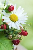 Bouquet from a camomile and wild strawberry — Stock Photo