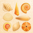 Stock Vector: Seashell collection on sand background