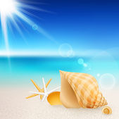 Shells and starfishes on the beach — Stock Vector