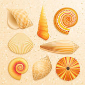 Seashell collection on sand background — Stock Vector