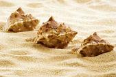 Sea shells on the beach — Stock Photo