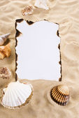 Burned paper with shells — Stock Photo