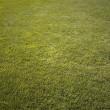 Green fresh cut grass ona summer day. park yard outdoors — Stock Photo #5923023