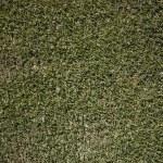 Green fresh cut grass ona summer day. park yard outdoors — Stock Photo #5923036