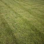 Green fresh cut grass ona summer day. park yard outdoors — Stock Photo #5923124