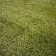 Green fresh cut grass ona summer day. park yard outdoors — Stock Photo