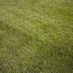 Green fresh cut grass ona summer day. park yard outdoors — Stock Photo #5923136