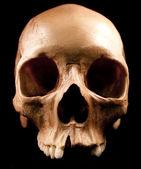 Human skull - bone head dead teeth spooky scary pirate isolated evil — Stock Photo