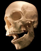 Human skull - bone head dead teeth spooky scary pirate isolated evil — Stock Photo