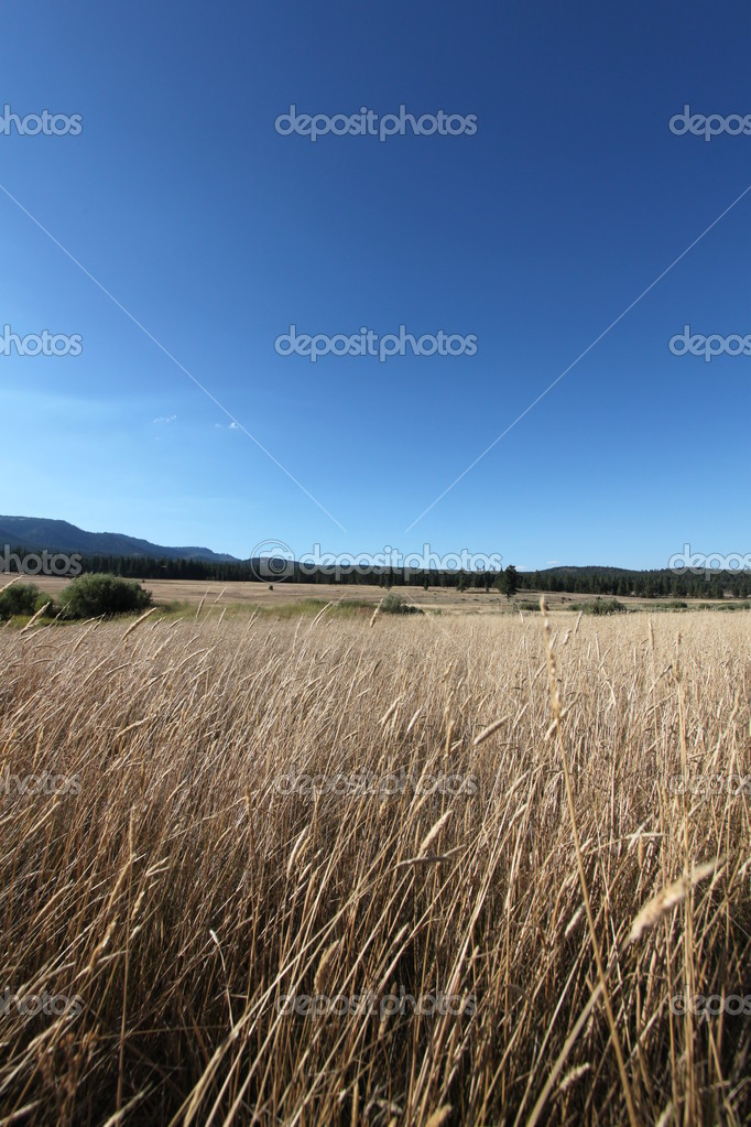 Open meadow with blue sky — Stock Photo #6529743